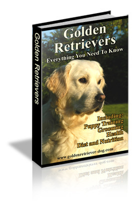Golden Retrievers Everything You Need To Know